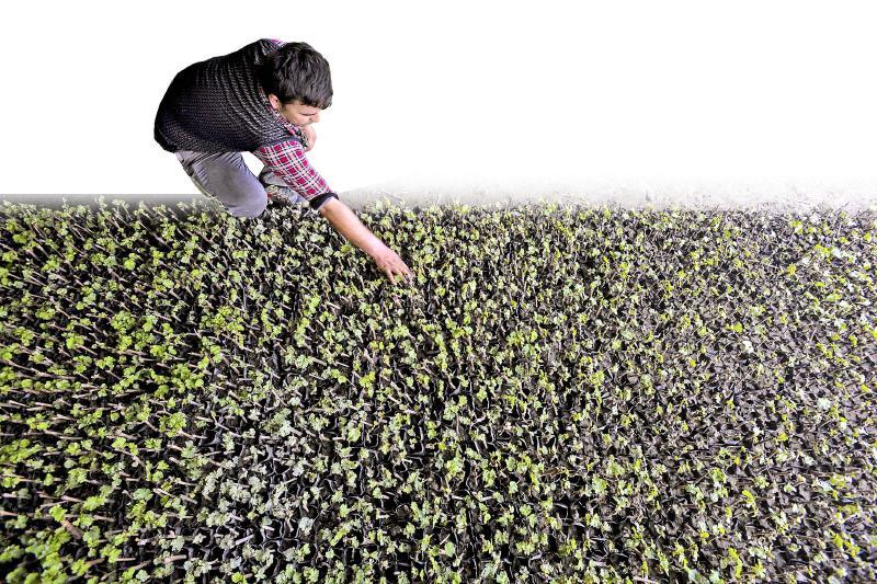 提出:优化产品产业结构,着力推进农业提质增效;推行绿色生产方式,增强