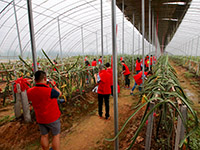 万邦千禾农场计划投资10亿元助中牟贫困户脱贫