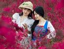 透骨红的红花��木林