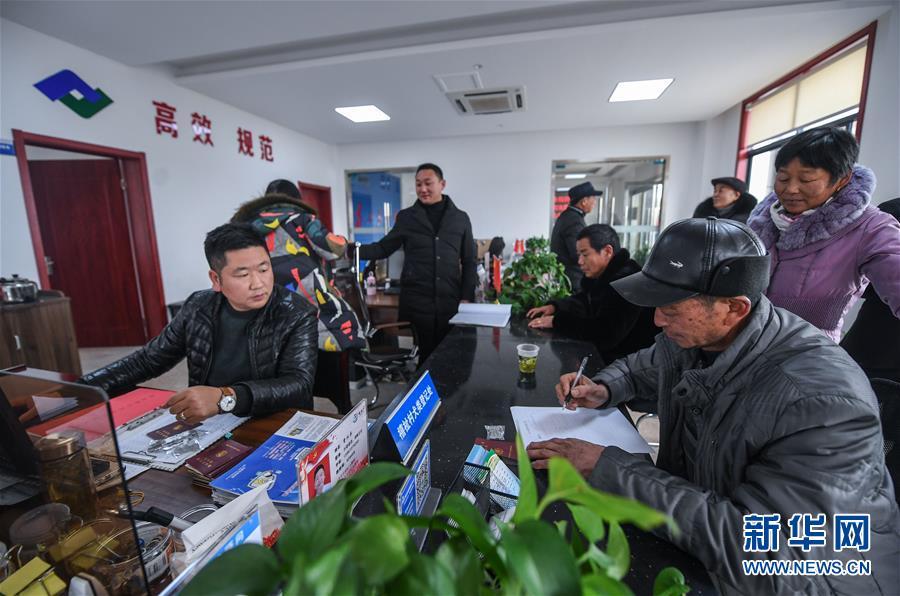 12月31日,在长兴县泗安镇禧祉村便民服务中间内,做事人员正在为村民办理犬类免疫证的登记、领取营业。新华社记者 徐昱