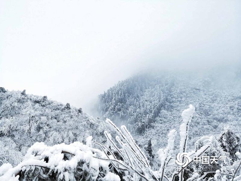 近日,强冷空气南袭,矮温雨雪天气不息。五岳之一的南岳衡山千里冰封,展现雾凇奇不悦目,暂时间,玉树琼花、银装素裹,相等波行!童话般的美景,不是仙境却胜似仙境。(图文:曾志龙)