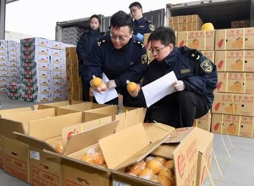 1月20日,福建平潭港区海关人员在检查刚刚抵达的台湾水果。(新华社)