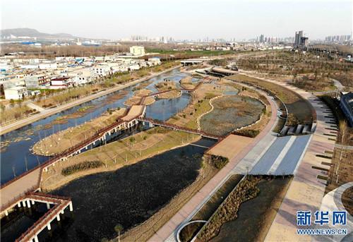 这是河南省平顶山市综?#29616;?#29702;后的湛河河道(3月12日无人机拍摄)。