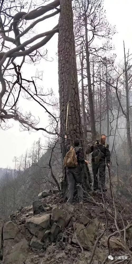 为寻找到雷击点,森林公安前后有四位民警受伤。