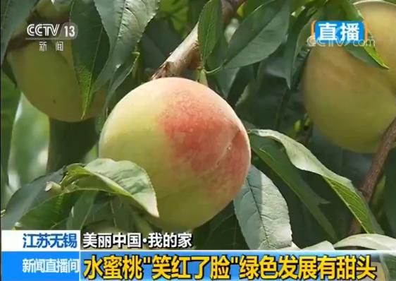 现在阳山镇的水蜜桃种植面积有3.2万亩,种植方式也从原来每家三五亩散户种植变成了统一管理的农场形式。种植35亩水蜜桃的农场,长势好的年头,收入有近百万。去年,阳山镇桃产业经济达15亿元,其中农民人均纯收入达4.2万元。