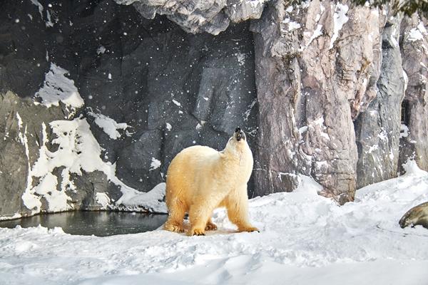 阻止全球变暖,和我们一起送北极熊回家吧!