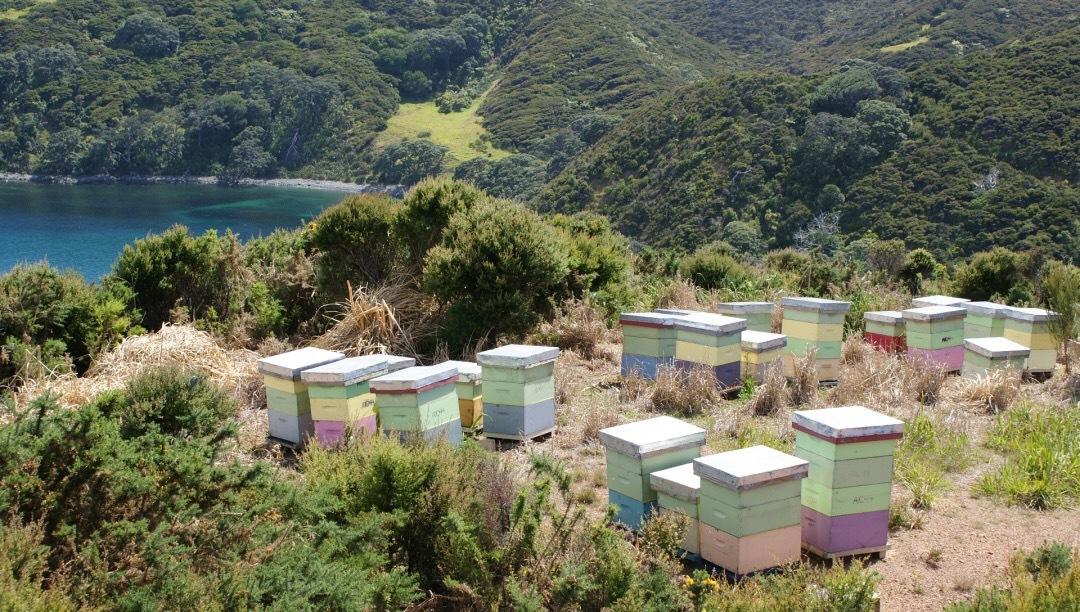 新西兰最新旅游宣传片出炉,BEE+麦卢卡蜂蜜产地引人入胜