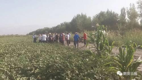 从调研情况来望,今年新疆新季棉花采摘时间将有所推迟,主要因为是在棉花滋长前期,新疆多个地区展现了矮温天气,这让棉花滋长发育的时间拉长,展望新季棉花将在9月中旬最先采摘,比去年推迟5—7天。