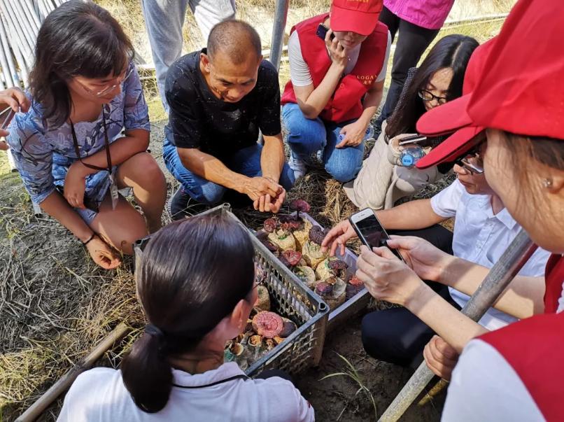 龙光志愿者走访菌菇种植基地
