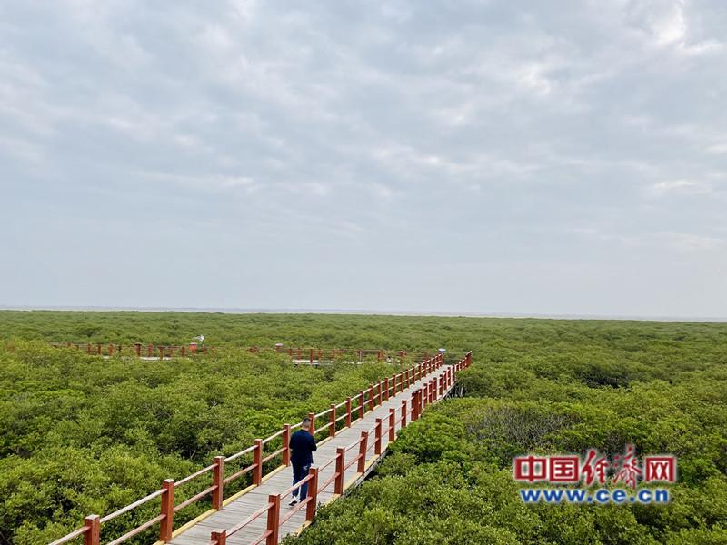 北海金海湾红树林珍惜区 经济日报-中国经济网记者 贾佳/摄