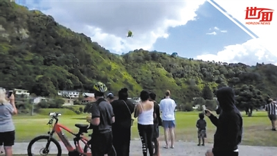 游客忆新西兰火山喷发:船长通报很多人未归