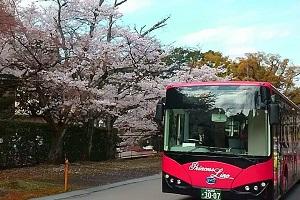 四月-京都巴士站台处