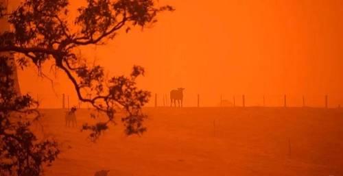 澳大利亚林火的谣言,是时候戳穿了