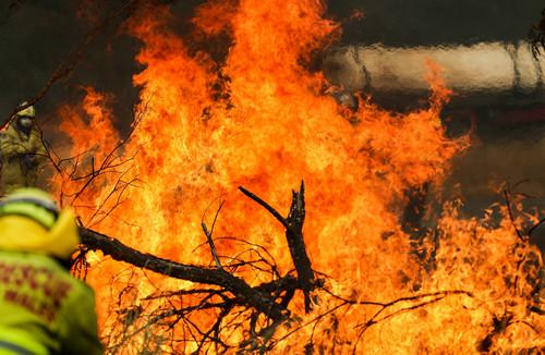 英媒:澳大利亚否认山火与气候有