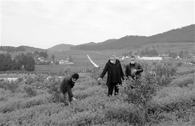 廣州市搬遷 公司宜賓科特派: 助力水產養殖企業全面復工