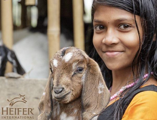 非营利机构国际小母牛组织加入Libra协会