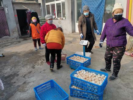 鸡蛋市场价格持续走低 这个村的蛋价凭啥居高不下?