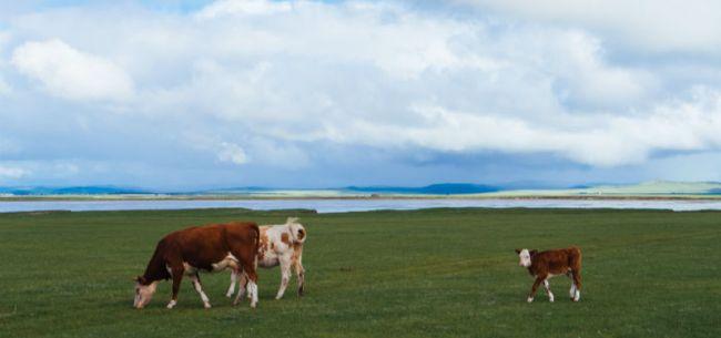 增持至圣牧第一大股东 蒙牛距离千亿目标还有多远