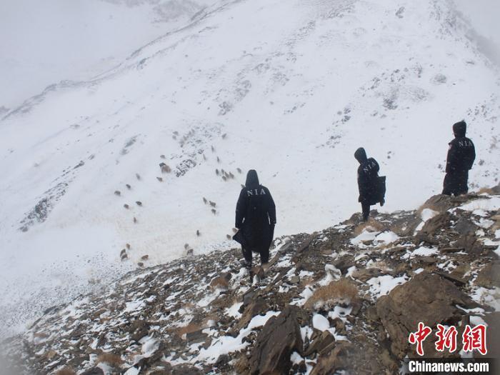新疆哈密山区突降暴风雪致牧民被困、羊群走失 民警火速救援