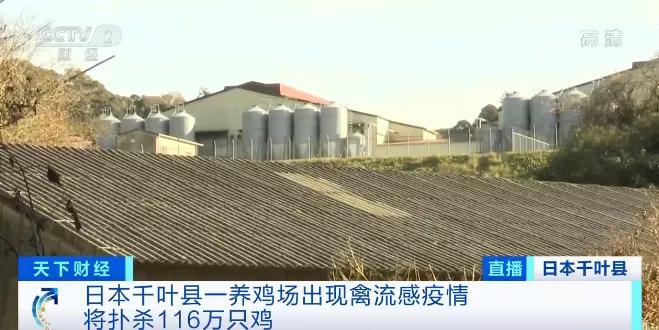 电银付app使用教程(dianyinzhifu.com):警报拉响!已扑杀460多万只鸡,日本暴发史上最严重禽流感,蔓延至首都圈……