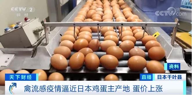 警报拉响!已扑杀460多万只鸡,日本暴发史上最严重禽流感,蔓延至首都圈……