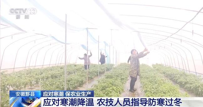 寒潮来袭 多地相关部门和人员积极应对保障蔬菜安全生产