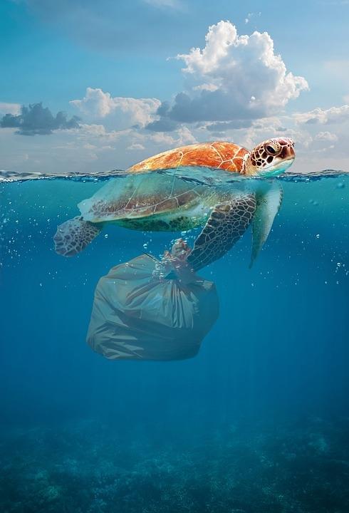 200斤巨型海龟不治身亡:兽医解剖身体后发现6斤海洋垃圾