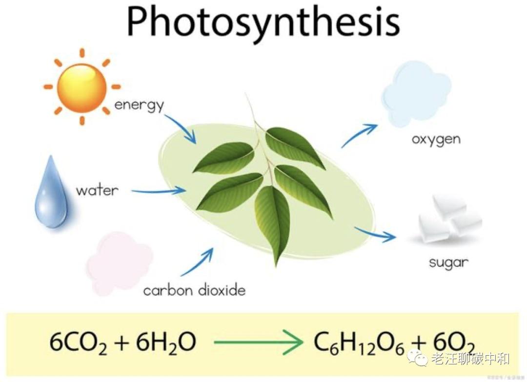 一颗碳原子的一生